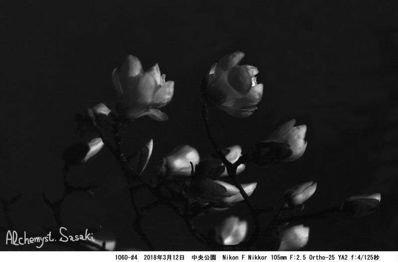 白木蓮#4 1060-#4-3