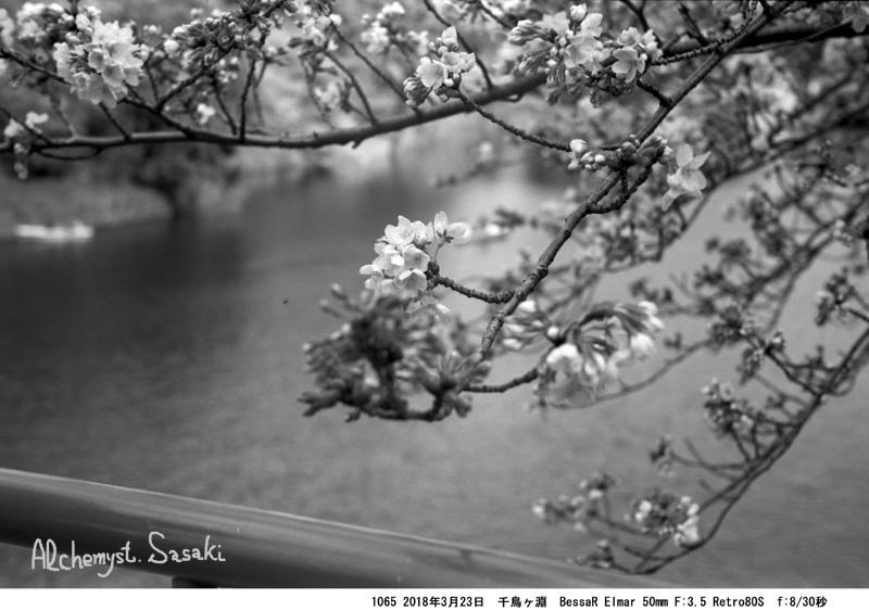 お堀の櫻1065-25