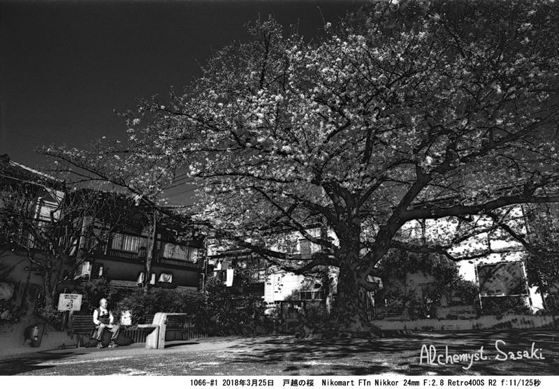戸越の桜1066-#1-18