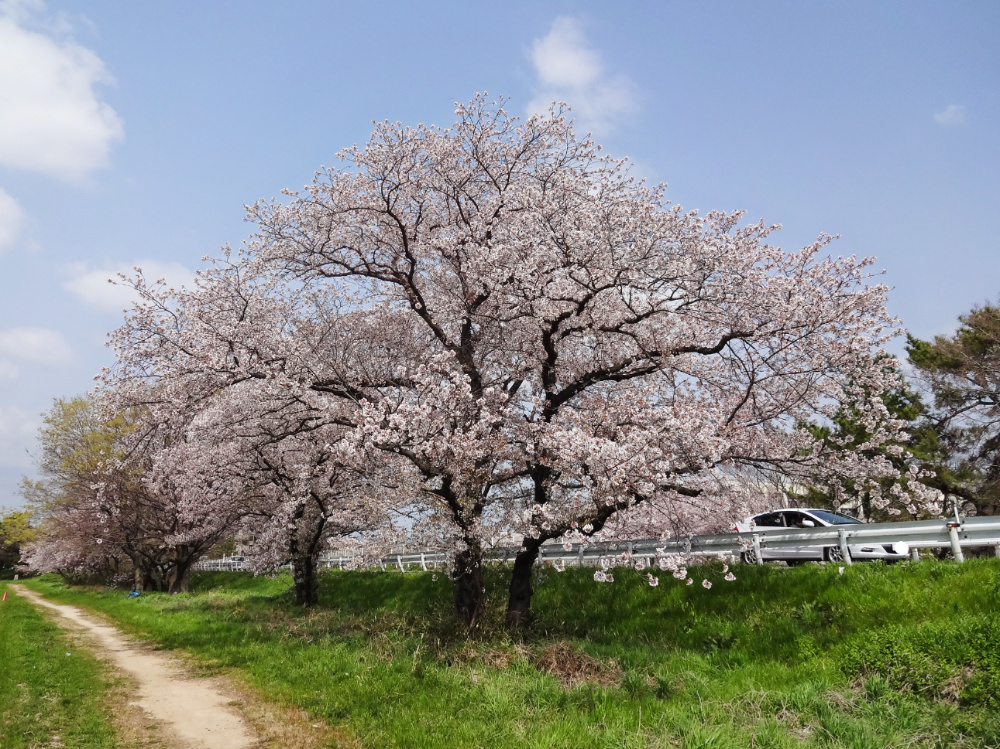 武庫川DSC00814_LI