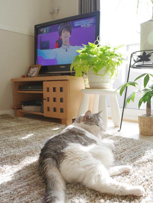 猫が向ける冷たい視線