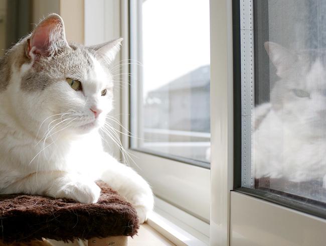 猫で感じる春の足音