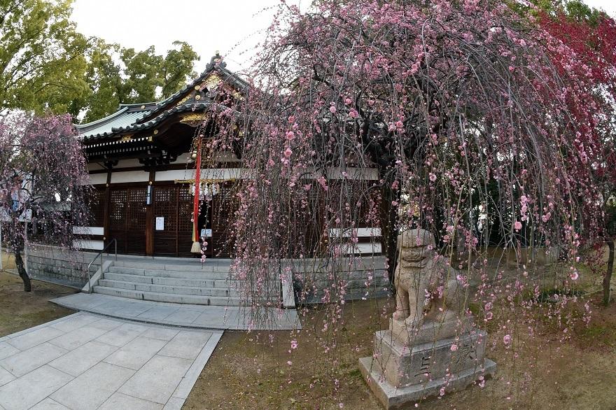 屯倉神社・梅 (0)