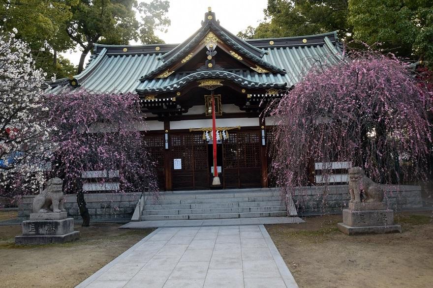 屯倉神社・梅 (2)