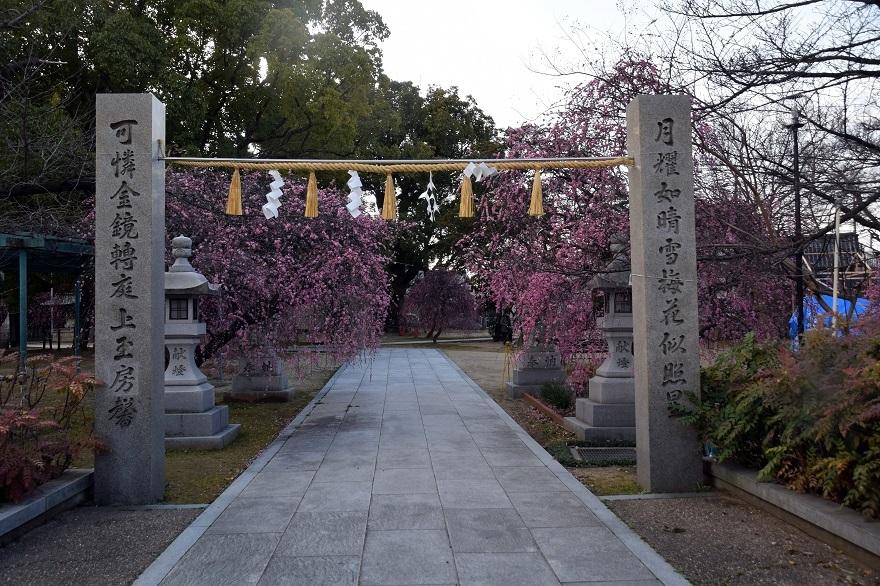 屯倉神社・梅 (20)