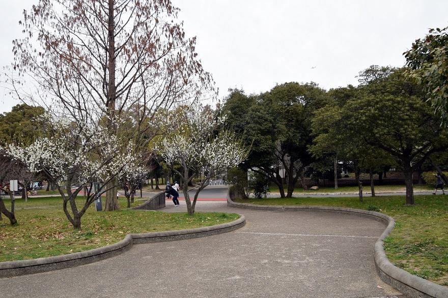 久宝寺・梅花 (13)
