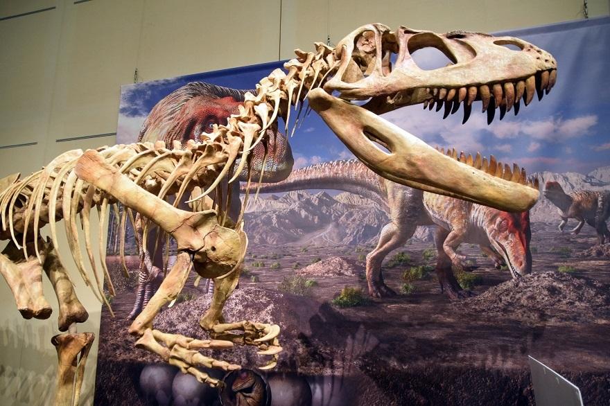 恐竜の卵展 (0)