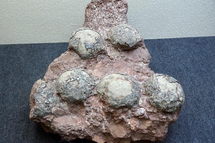 恐竜の卵展 (5)