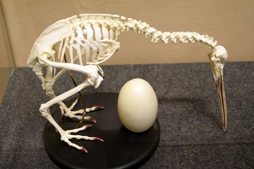恐竜の卵展 (22)