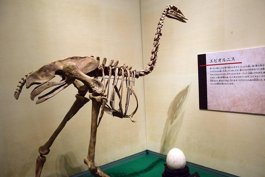 恐竜の卵展 (023)