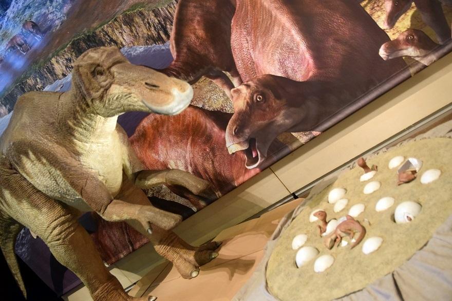恐竜の卵展 (26)