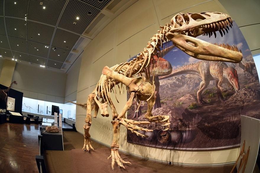恐竜の卵展 (28)