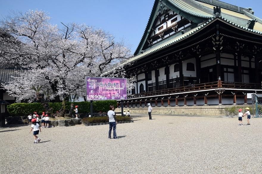 大念仏寺・桜 (00)