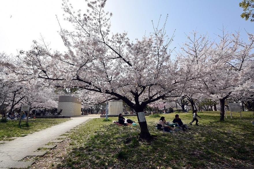 白鷺・桜 (0)