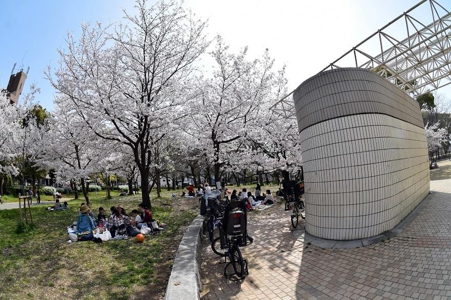 白鷺・桜 (1)