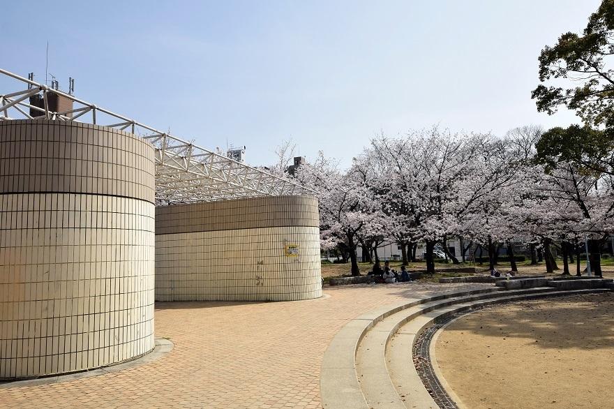 白鷺・桜 (2)