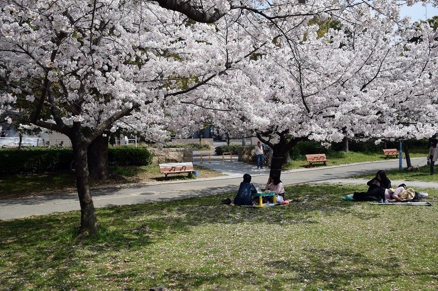 白鷺・桜 (5)