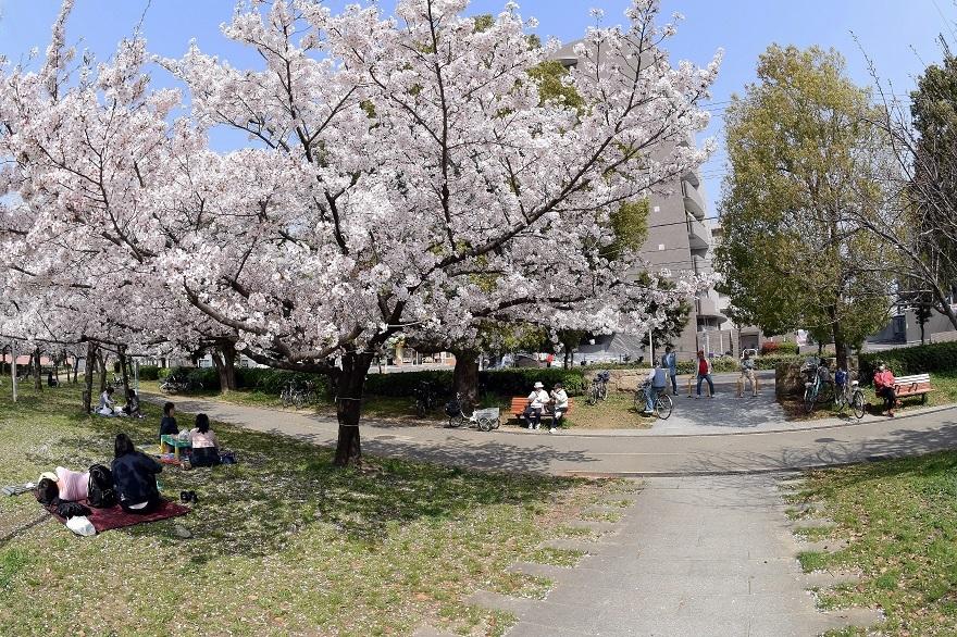 白鷺・桜 (9)