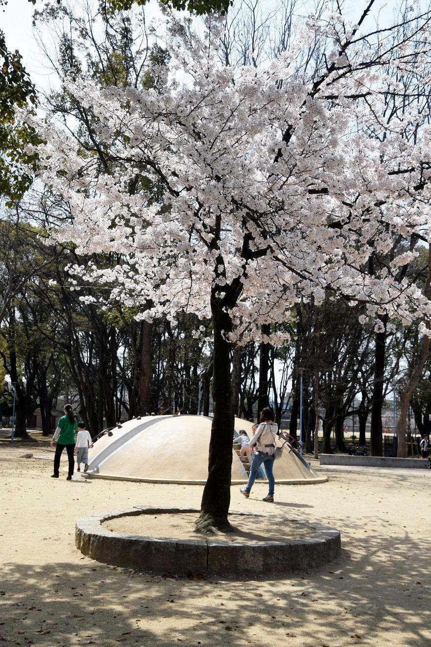 白鷺・桜 (12)