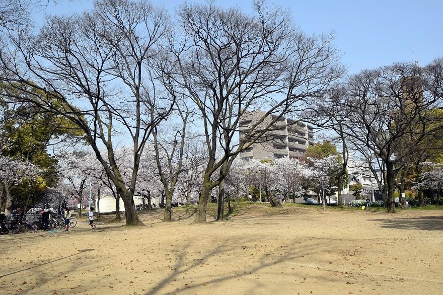 白鷺・桜 (15)