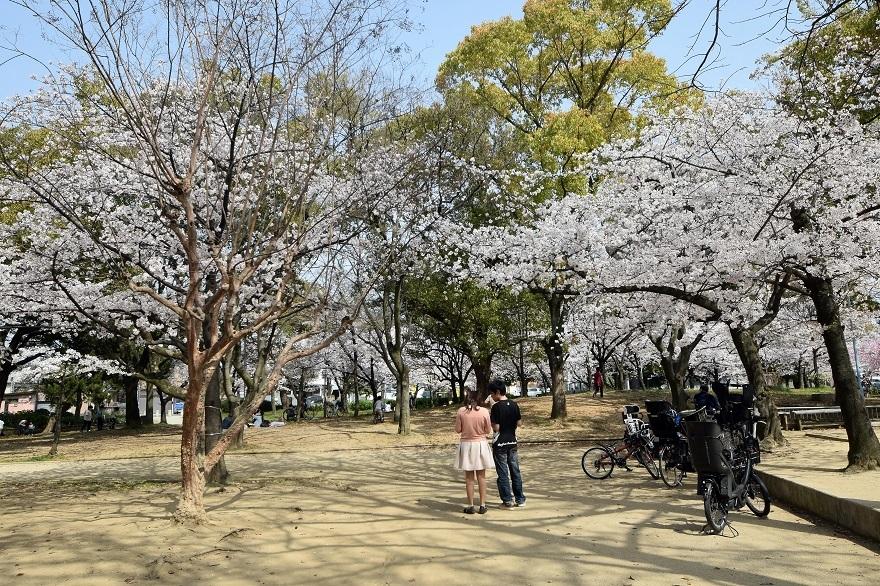 白鷺・桜 (16)