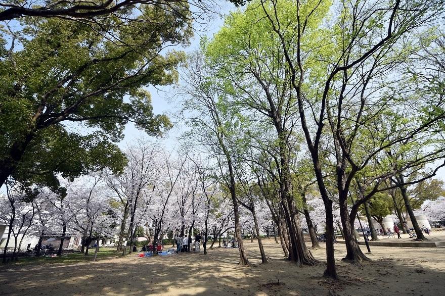 白鷺・桜 (18)