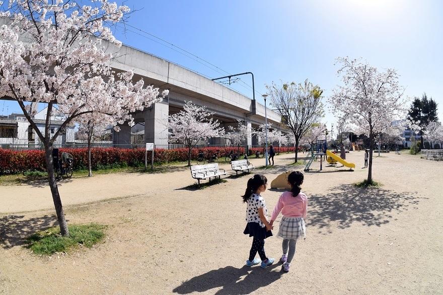 長池公園・桜 (14)