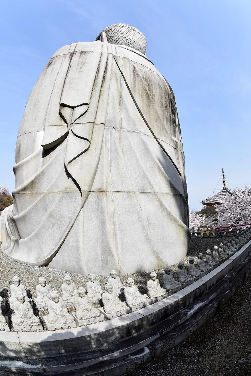 壺阪寺大仏桜 (7)