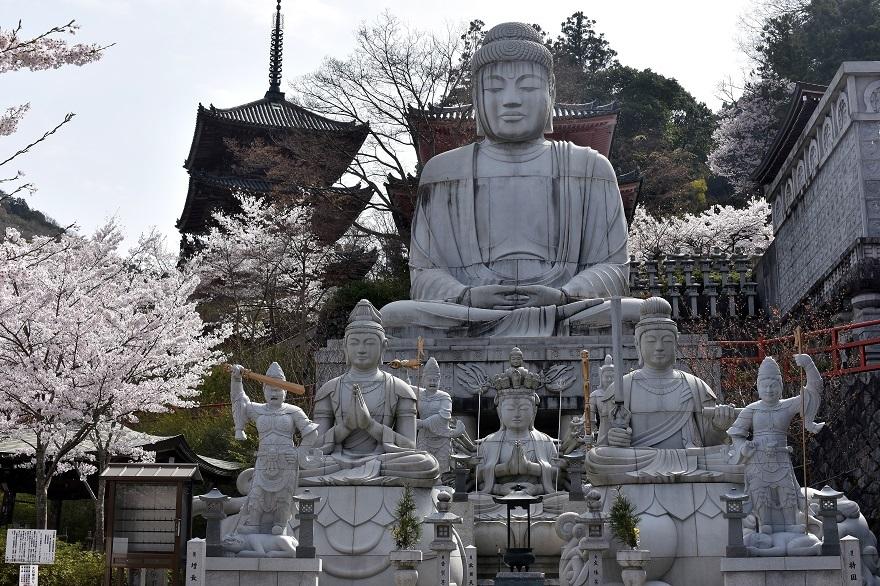 壺阪寺大仏桜 (5)