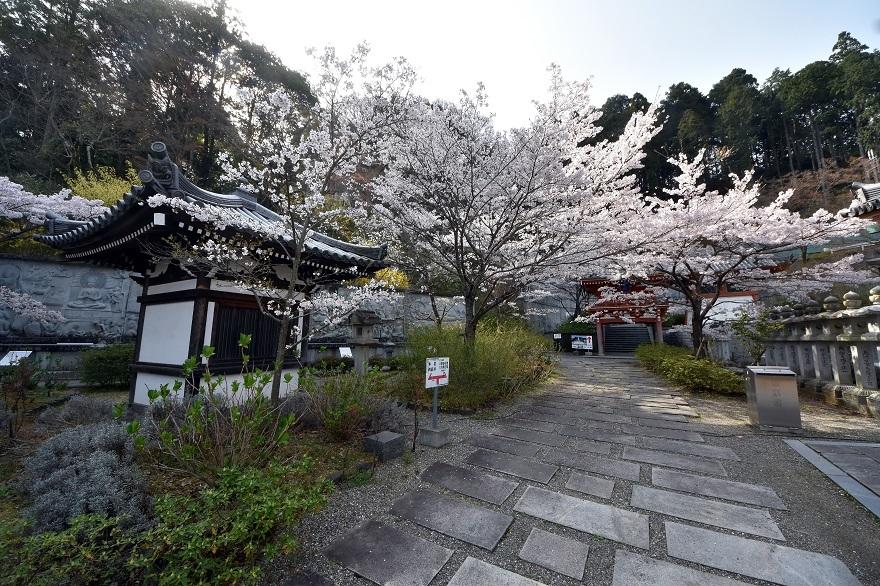 壺阪寺大仏桜 (10)