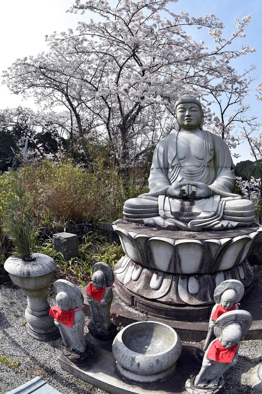 壺阪寺大仏桜 (011)