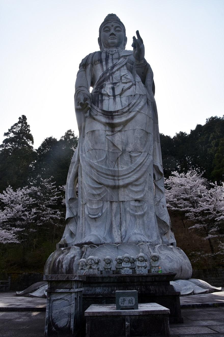 壺阪寺大仏桜 (14)