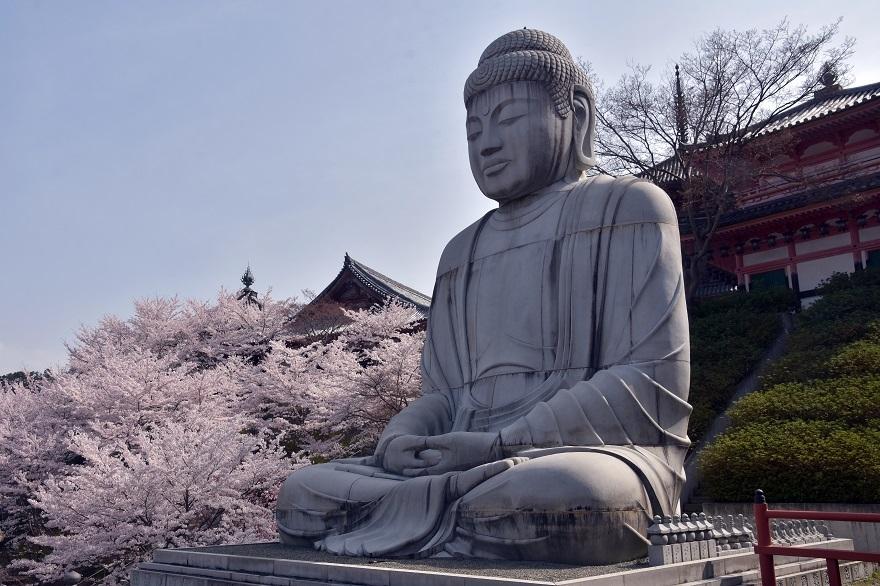 壺阪寺大仏桜 (18)