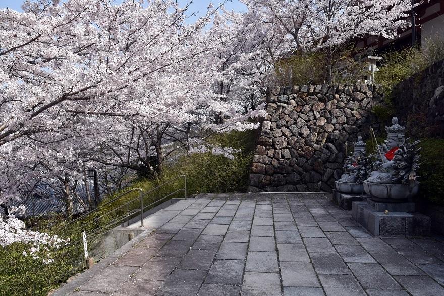 壺阪寺大仏桜 (019)