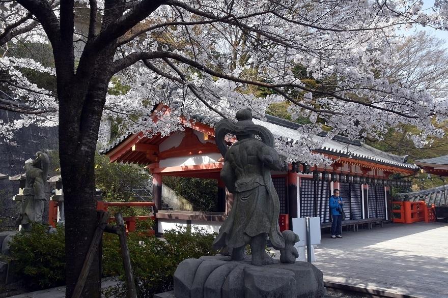 壺阪寺大仏桜 (20)