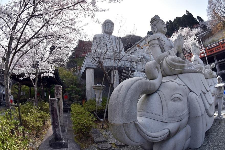 壺阪寺大仏桜 (21)