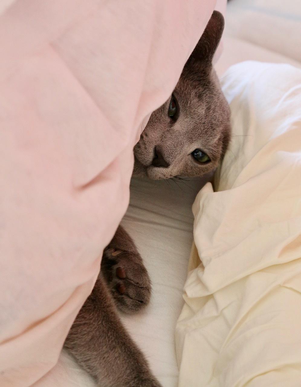 てお寝ぼける