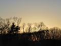 林の落日.