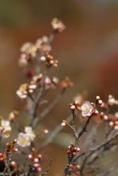 咲き始めた(20180212)