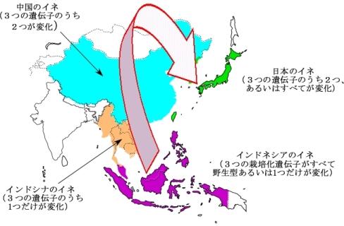 イネ原産地 東南アジア