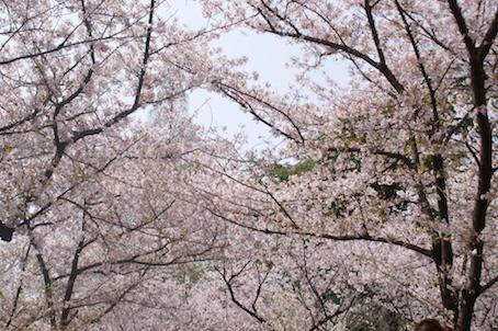 180401桜