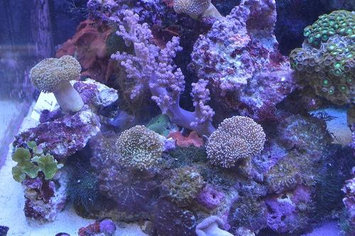 サンゴ乳井か (16)