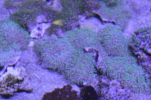サンゴ乳井か (3)