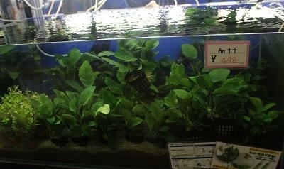 水草0229
