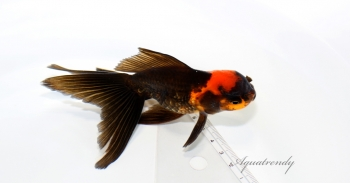 blog_dragonoranda001L.jpg