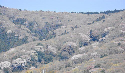 s-桜の山20180401