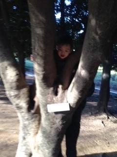 圭悟君木登り
