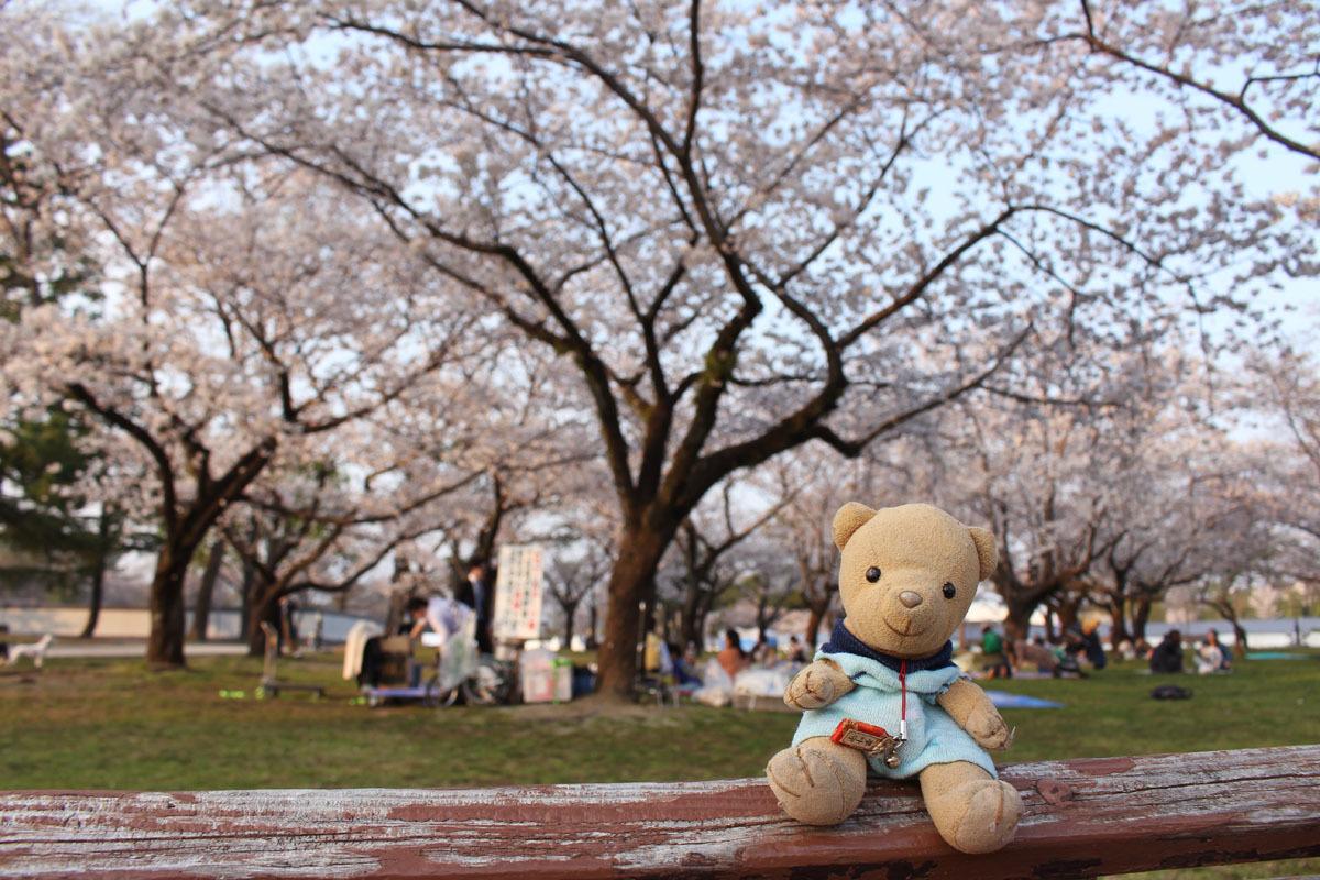 駿府城公園のベンチで 桜と 180326