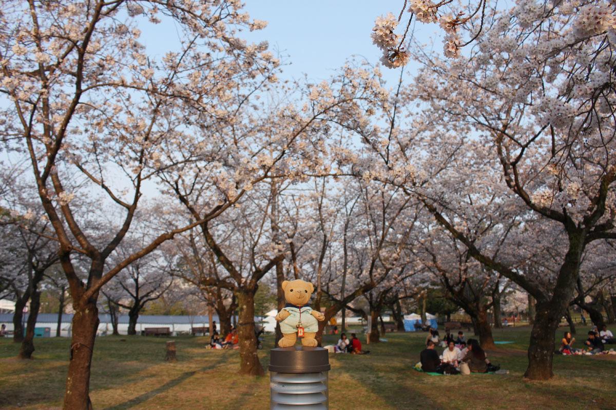 駿府城公園で ソメイヨシノと 180326