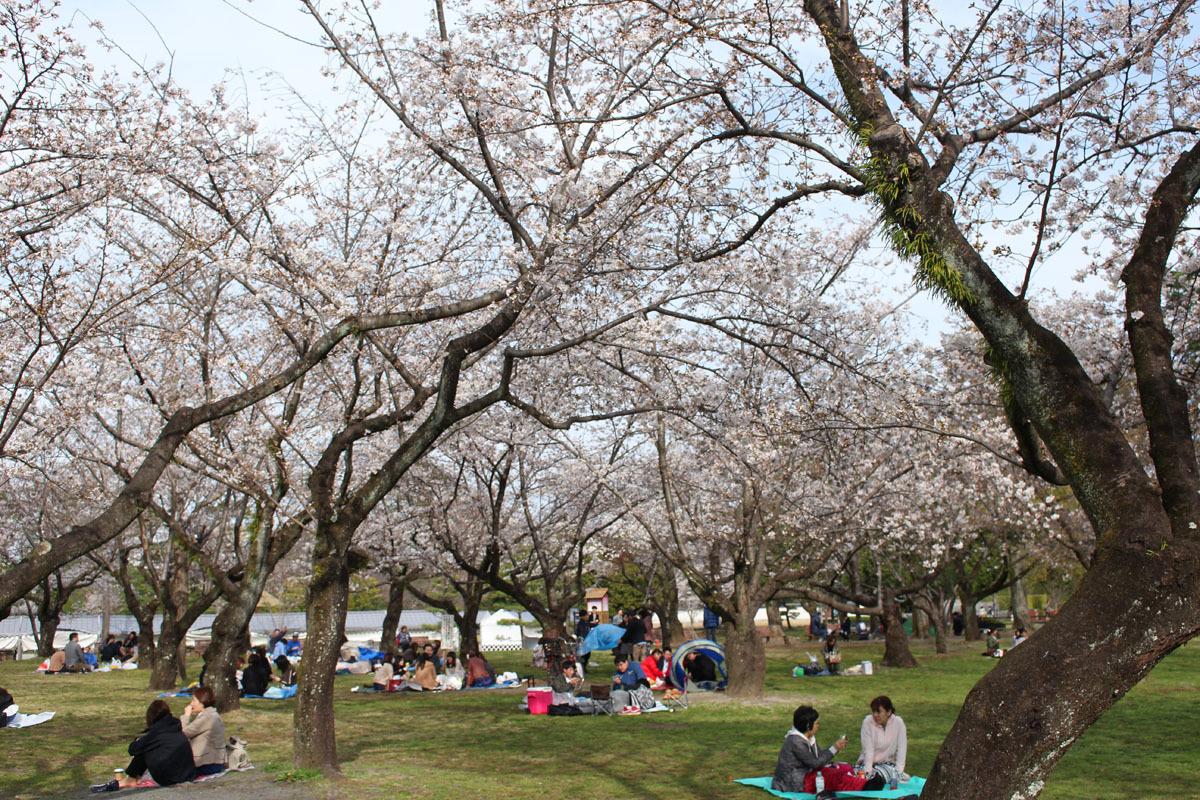 駿府城公園 見頃を迎えたソメイヨシノと花見客 180324